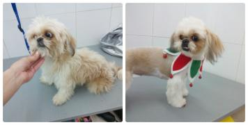 professional grooming dogs and cats